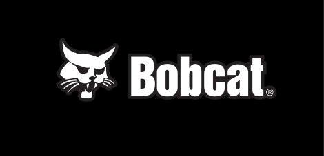 bobcat_web
